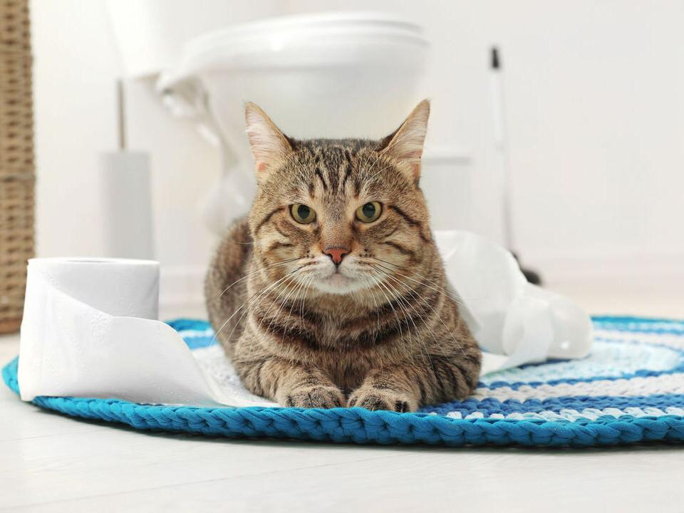 貓咪亂尿尿